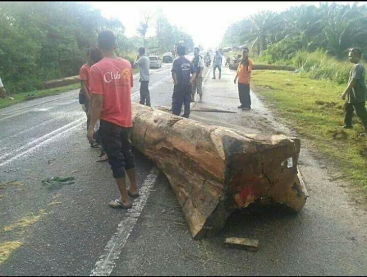 Kayu balak jatuh di jalan raya